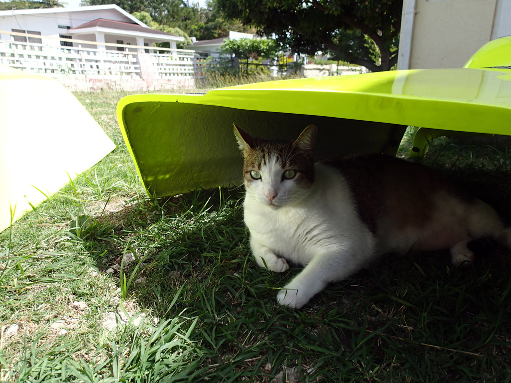 cat_shade_1.jpg